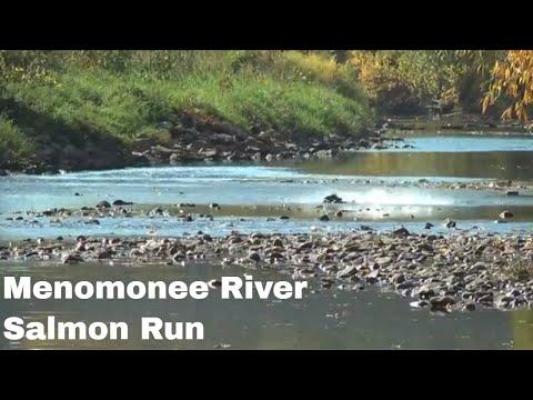 Salmon Run 2012