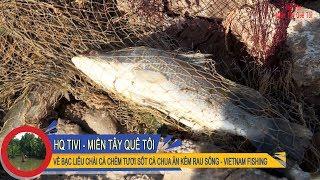 Miền Tây Quê Tôi Tập 19 - Về Bạc Liêu chài cá chẻm tươi sốt cà chua ăn kèm rau sống[VIETNAM FISHING]