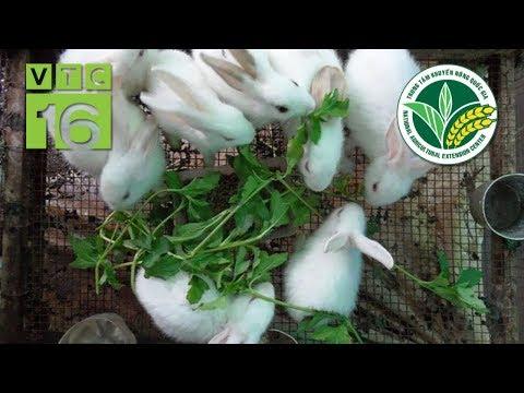 Kỹ thuật phòng bệnh cho thỏ mùa nắng nóng | VTC16