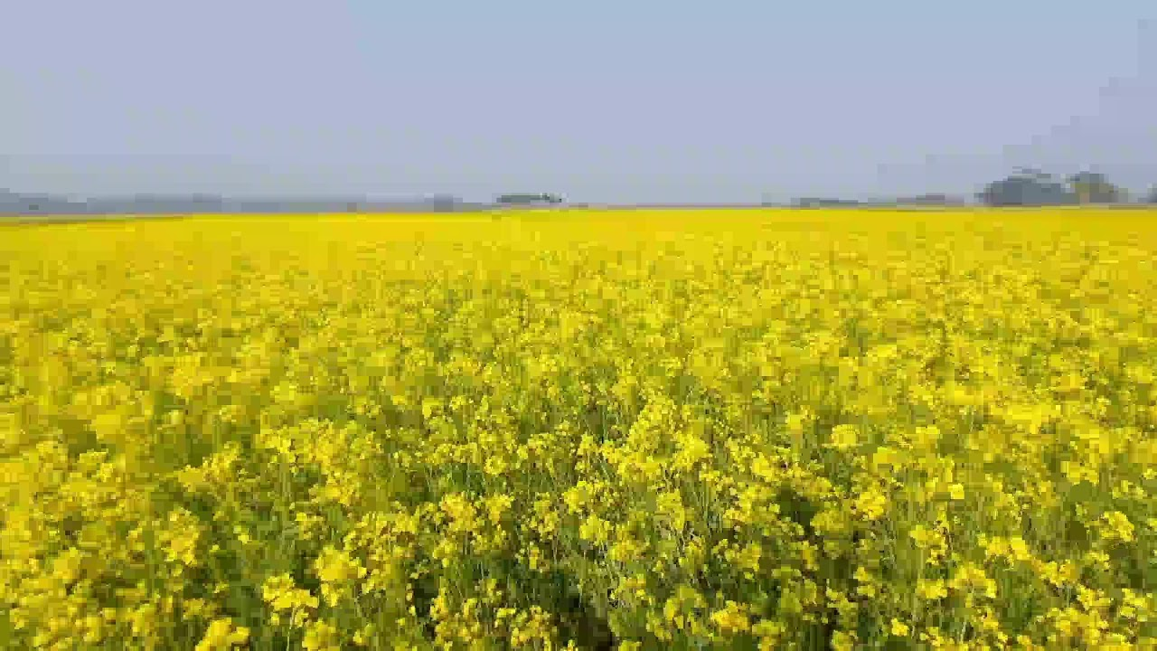 Download HARMONIAS DA NATUREZA - Flores   Músicas e imagens para equilibrar o ambiente