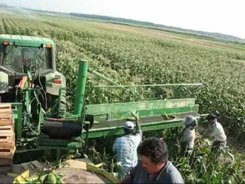 Meyer S Farms Field Packing Sweet Corn Youtube