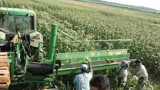 MEYER'S FARMS  FIELD PACKING SWEET CORN