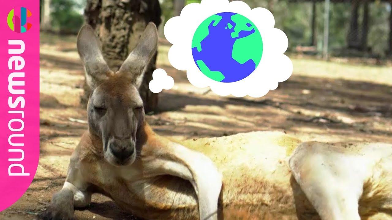 Animal adaptation homework help | Animal adaptation