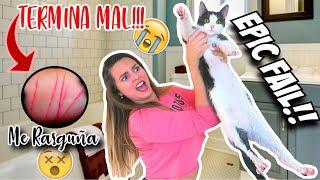 Estadísticas En Youtube Para El Video Intentando Bañar A Mi Gato Por Primera Vez Jenny Devil Noxinfluencer