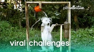 Pets Try Internet Challenges | The Pet Collective