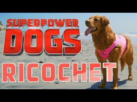 Filming Ricochet, Certified Therapy Dog | Superpower Dogs