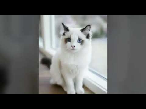 35 cat image