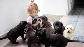 Dad Surprises Daughter With House Full Of Puppies!
