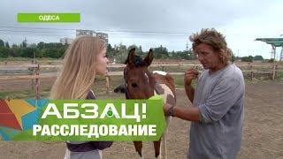 Почему в Украине не наказывают за жестокое обращение с животными. - Абзац!. - 04.10.2017