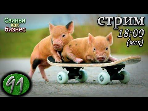 29 мая 🔴 Свиноводческий консилиум