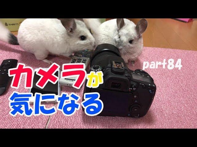 カメラが気になるペットたち part84