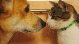 Ученые выяснили, кто больше любит людей — кошки или собаки.