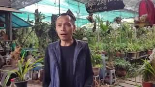 Du xuân. Mung 5 tết thăm vườn anh Trần Tuấn