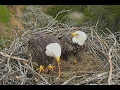 SC - Dad Delivers Breakfast on the Nest