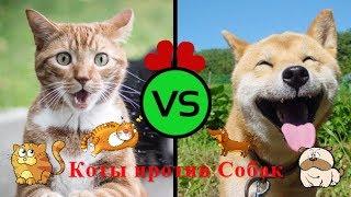 Коты против Собак!!!