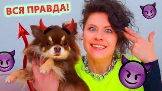 Миша стала хуже! Что вытворяет моя собака?! 10 фактов о моей собаке, День Рождения чихуа Миши