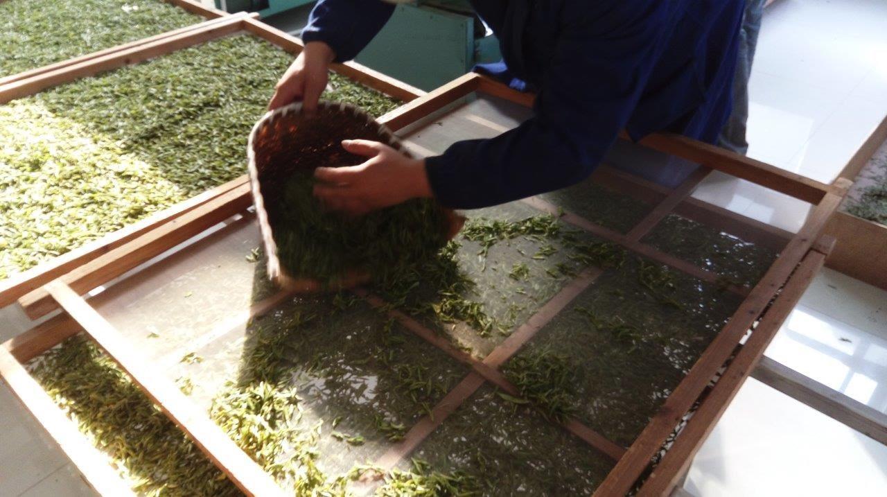 Китайский Зелёный Чай | чай для похудения цена спб