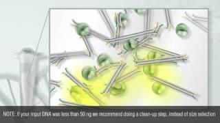 NEBNext Ultra II DNA Library Prep Protocol