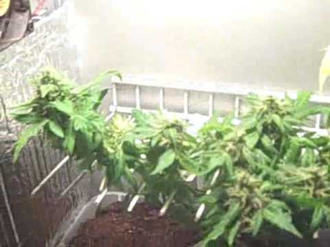 grow box game