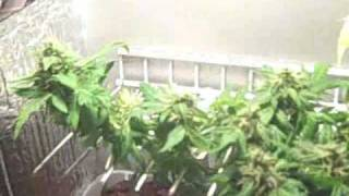 Stealth Pc Grow Box Lst Grow; Start To Finish