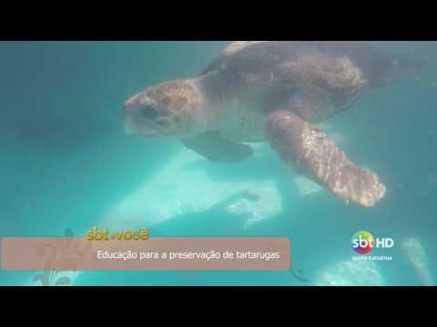 Educação para a preservação de tartarugas
