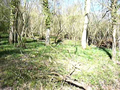 Toys Hill Woodland Walk Walking In Toys Hill Youtube