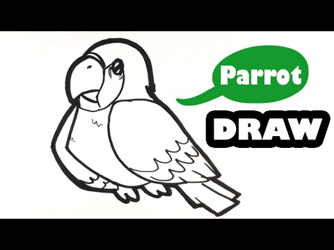 How to Draw a Parrot – Cute – Easy Pictures to Draw
