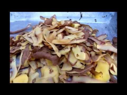 Как приготовить компост зимой? Куда девать отходы на кухне?