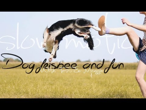 Dog Frisbee & Fun in SlowMotion | Border Collies Tess & Maggie | GoPro HERO5 black