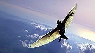 как сделать летающие крылья для человека чтобы летать