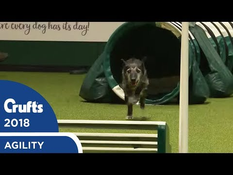 Agility - Crufts Singles Heat S/M/L (Jumping) Part 1 | Crufts 2018
