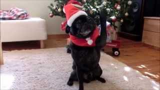 クリスマスが大好きな犬、ツリーの飾りつけをお手伝い