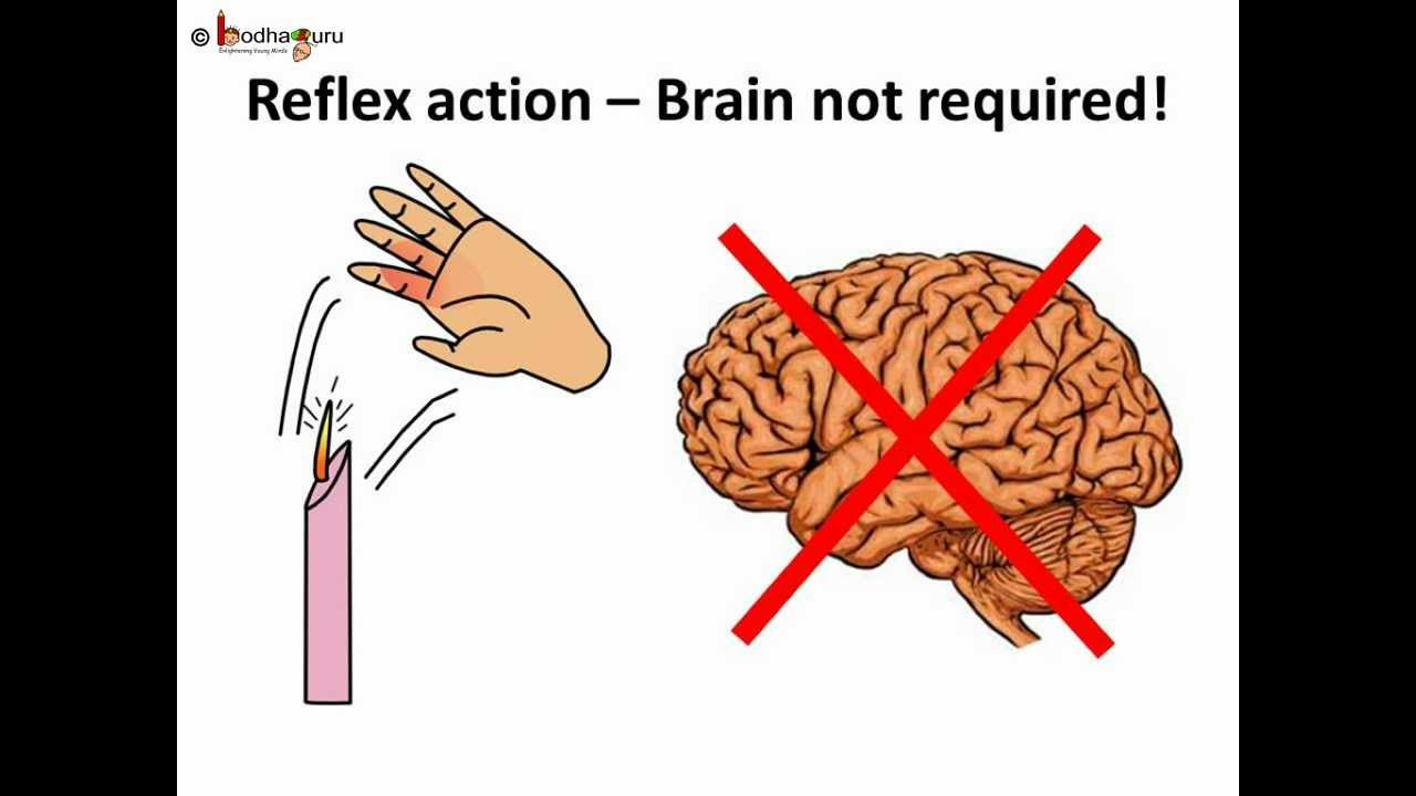 science human body nervous system telugu youtube rh youtube com human anatomy nervous system diagram diagram [ 1280 x 720 Pixel ]
