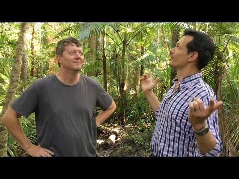 Native Australian rainforest at Cairns Botanic Garden