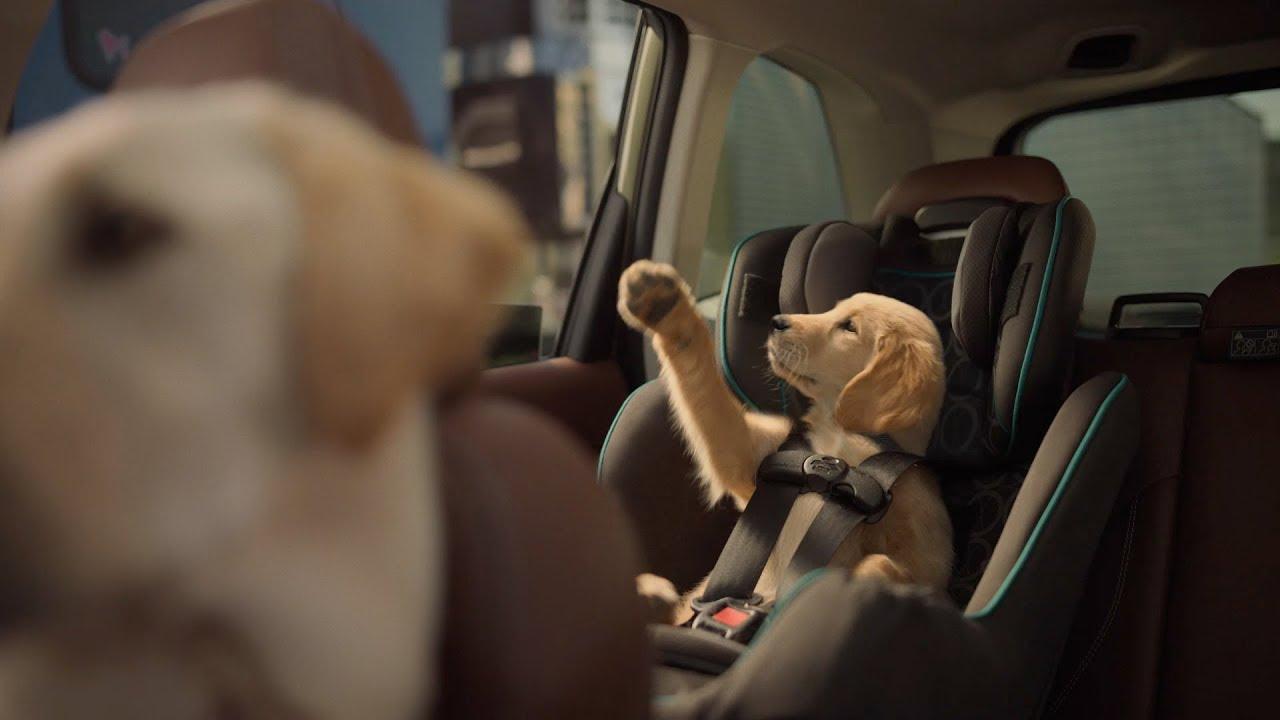 2020 Dog And Cat Christmas Commercial Subaru Dog Tested I Subaru Commercial I Honk   YouTube