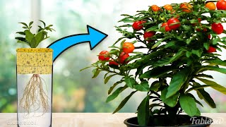 How to grow a r๐se in a potato: Unbelievably easy ways to grow flowers