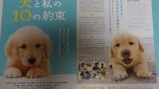 犬と私の10の約束 A 2008 映画チラシ 2008年3月15日公開 【映画鑑賞&...