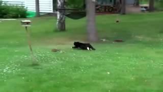 приколы про животных видео бесплатно смотреть онлайн