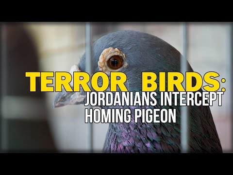 TERROR BIRDS: JORDANIANS INTERCEPT HOMING PIGEON