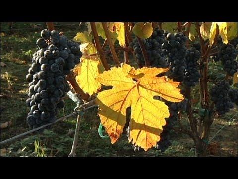 An Oregon Wine Grower: From Wall Street to Vineyard Farm