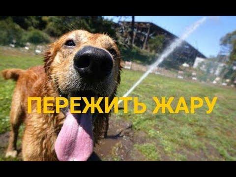 Как ведут себя собаки в жару