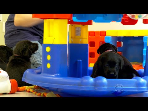 Guide dog school teams up with IBM