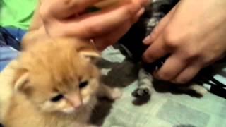 Как кормить мелких котят без кошки