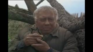 "Video Soviet movie ""Холодное лето 53-го"" / ""Cold summer of 1953"" download MP3, 3GP, MP4, WEBM, AVI, FLV September 2017"
