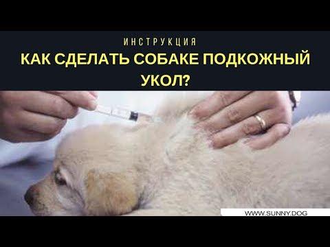 Как правильно ставить уколы собакам видео