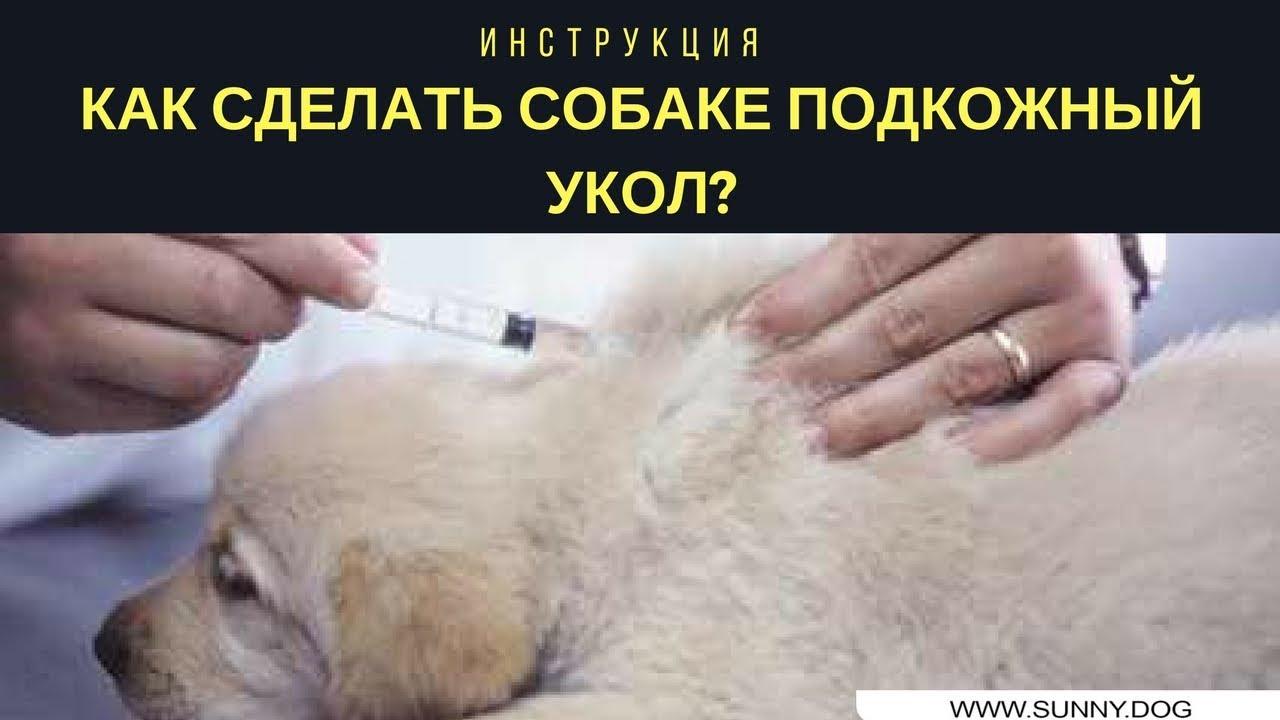 как правильно сделать прививку собаке