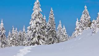 """Relaxing Peaceful Instrumental Music, Flute, Violin and Harp  """"Mountain Pine"""" By Tim Janis"""