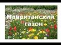 Мавританские #газоны и луговые #цветы Техаса