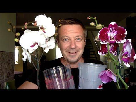 орхидеи из ашан обзор бюджетных покупок
