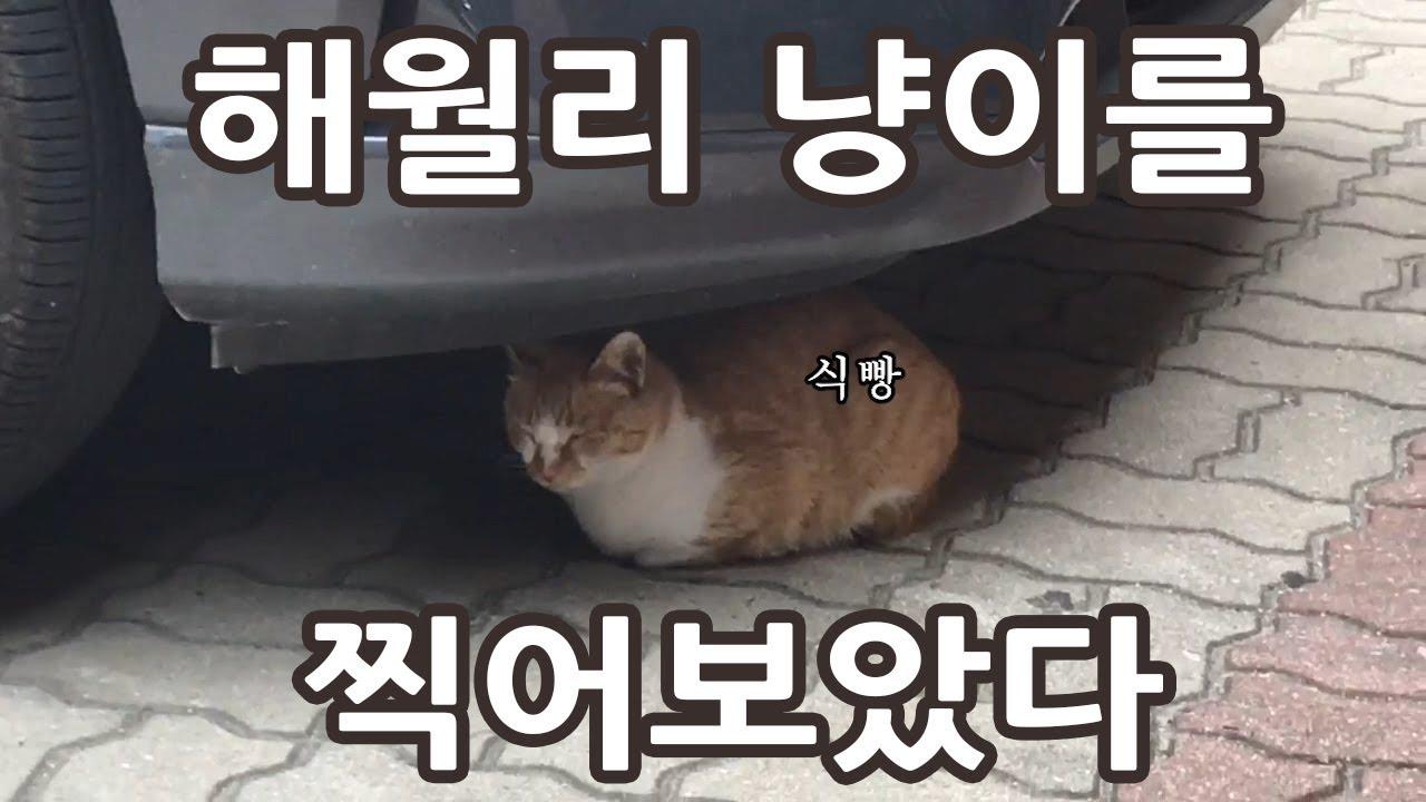 해월리 고양이를 찍어보았다(Haewoli Cats)